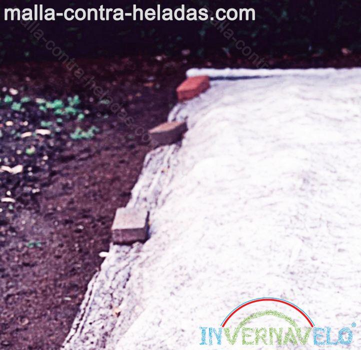 Malla térmica colocada sobre el cultivo para protección del mismo