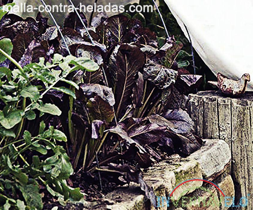 cultivos dañados por el clima frío