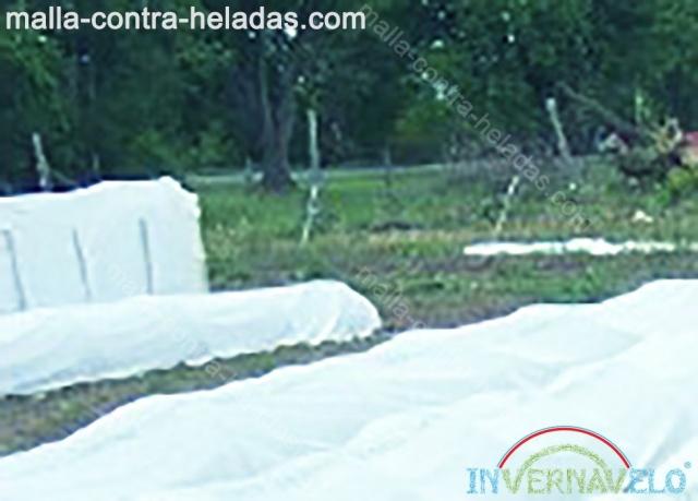 Groud cover sobre el jardín protege los cultivos contra los climas externos.