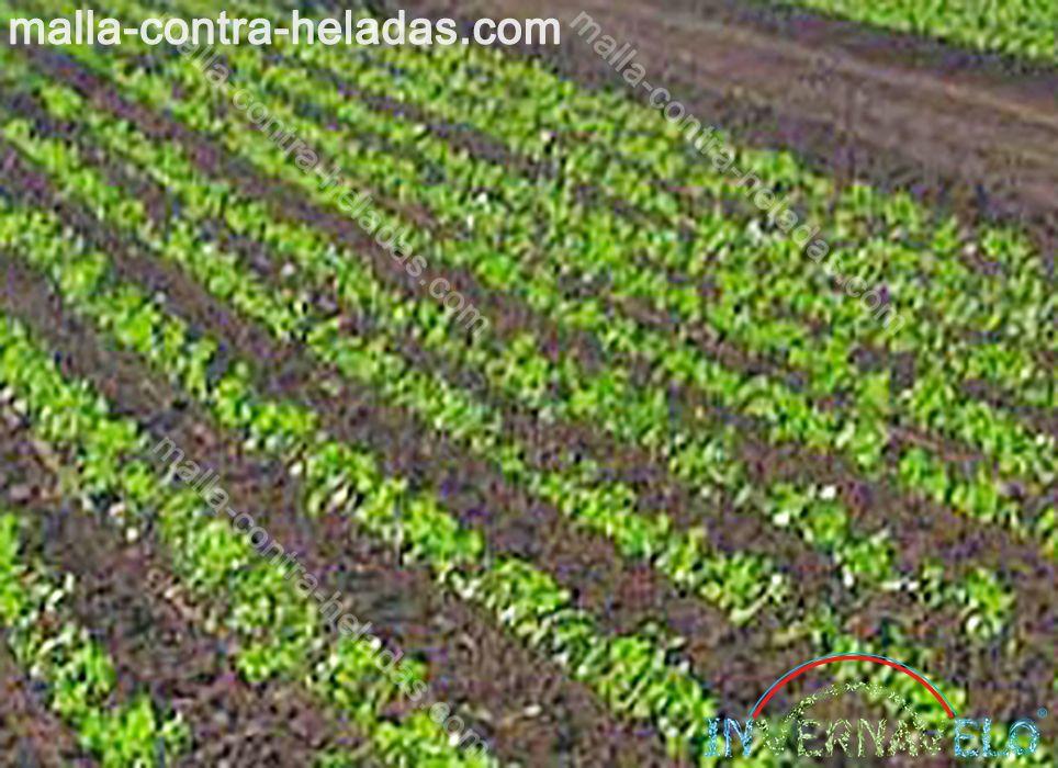 campo de cultivos desprotegidos.