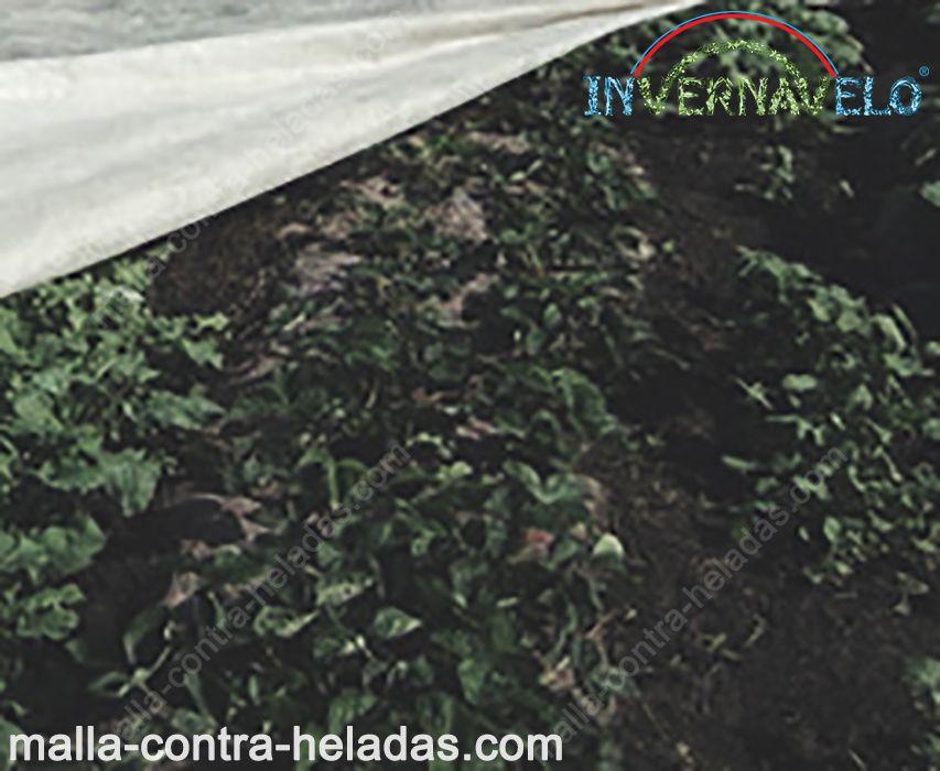 Cultivos protegidos utilizando la malla térmica invernavelo