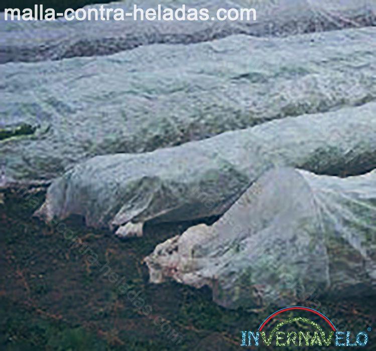 Columnas de micro túneles sobre el campo protegiendo los cultivos.